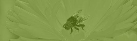 Nos produits naturels issus de la ruche